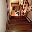 20130929 ハナちゃん、階段を下りるの?