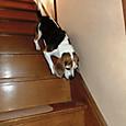20130929 階段を高速で下りるハナ
