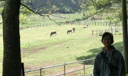 20140427 牛か馬か