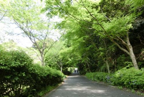 201404028 さわやかな木陰の道