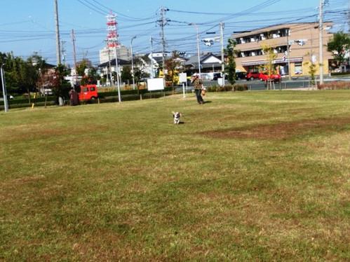 20141018 疾走するハナちゃん