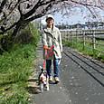 20130330 ハナ&ubazakuraさんと桜見物