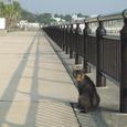 海釣公園の野良猫
