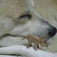 今は仲良しの犬と恐竜