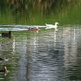 2010/08/10撮影 いつもの馬込川