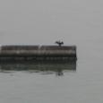 2010/03/21撮影 浜名湖の舘山寺2