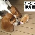 2010/05/01撮影 ズーズーペット