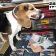 2010/05/16撮影 デストロイヤーのハナ
