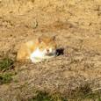 2011/03/19撮影 野原の猫