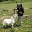 2011/05/04撮影 デンマーク牧場のヤギ