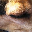 2012/03/31 ハナの目