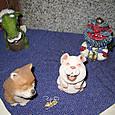 2012/05/01 ウサギと犬
