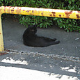 2012/09/09 龍小前の歩道に居た黒猫