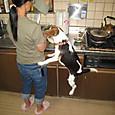 2012/10/06 ハナの朝ご飯