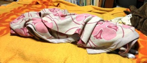 2012/12/08 まだ睡眠中のハナ