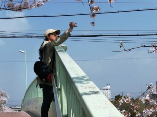 20130330 桜見物