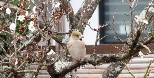 2010/02/06撮影 掛川市清水邸庭園