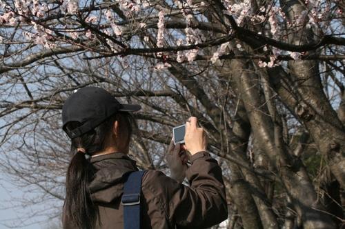 ubazakuraさん 2008/3/8撮影
