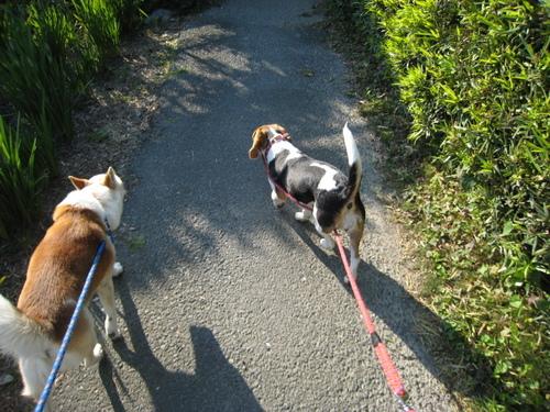 2009/5/31撮影 久しぶりのお散歩