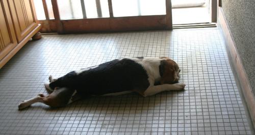 2012/04/29 玄関で行き倒れ