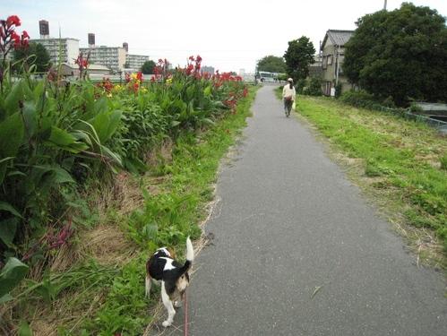 09/07/12撮影 ハナのお散歩コース