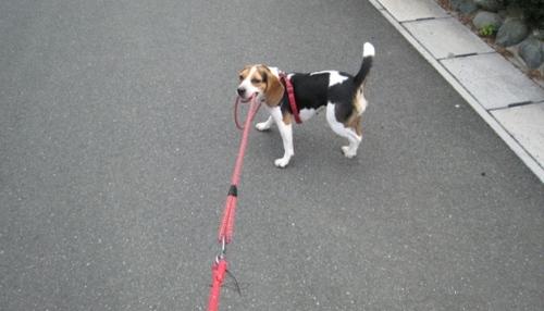 2009/07/19撮影 散歩中のハナ