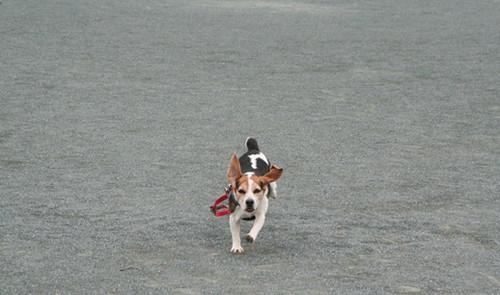 2012/05/01 晴天の疾走4