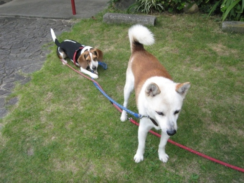 09/08/08撮影 朝のお散歩前の一時