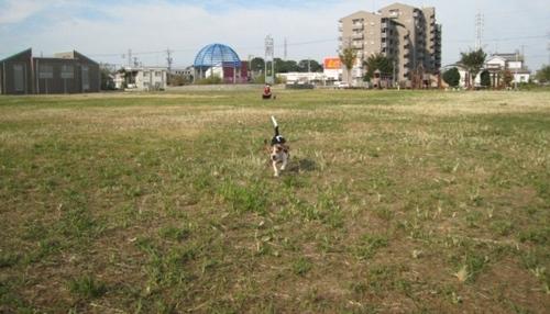 2009/09/19撮影 呼び戻し訓練