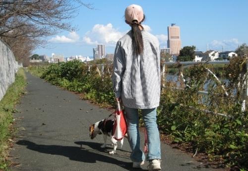 2009/20/11撮影 馬込川沿いにて