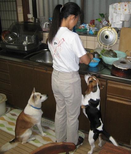 2009/11/01撮影 朝食の準備開始