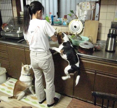 2009/11/01撮影 朝食の準備2