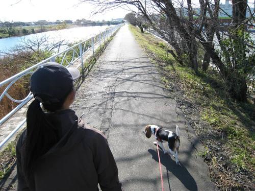 2009/11/21撮影 今朝の馬込川