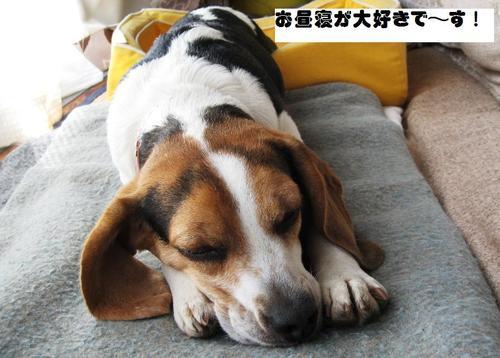 2010/05/02撮影 お昼寝のハナ