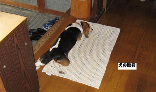 2010/05/22撮影 犬の敷物