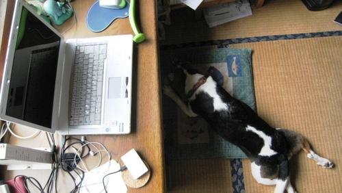 2010/06/27撮影 犬の敷物