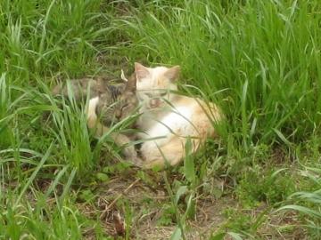 2011/05/02撮影 猫
