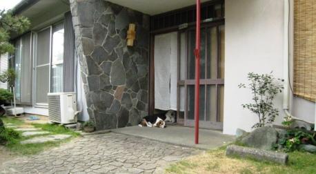 2011/08/19撮影 風通しの良い所