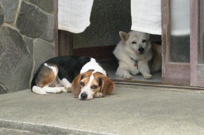 2011/08/19撮影 玄関の犬たち