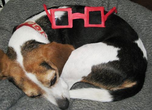 2011/11/20撮影 ハナの眼鏡
