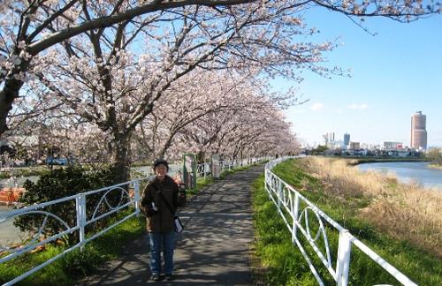 2012/04/07 五分咲きのソメイヨシノ
