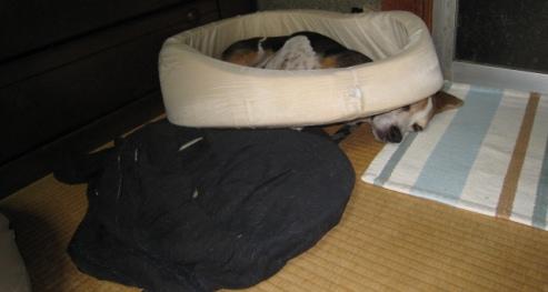 2012/09/15 バラバラになった寝床