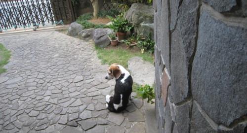 2012/10/06 今朝のハナ