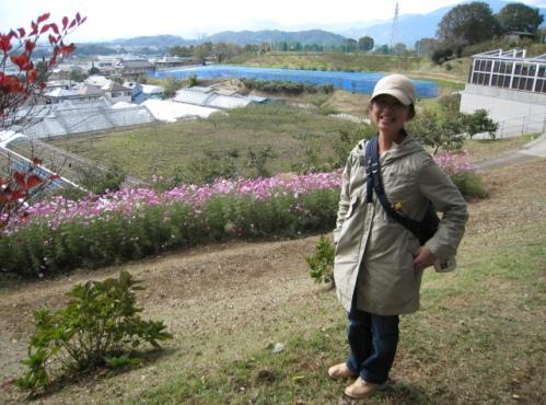 2012/11/3 東農大のコスモス