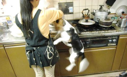 20130512 朝食準備中のubazakuraさん