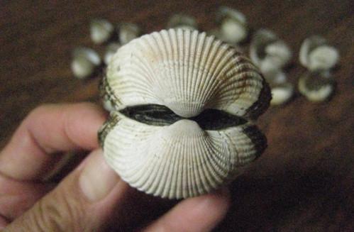 20130713 さるぼう貝