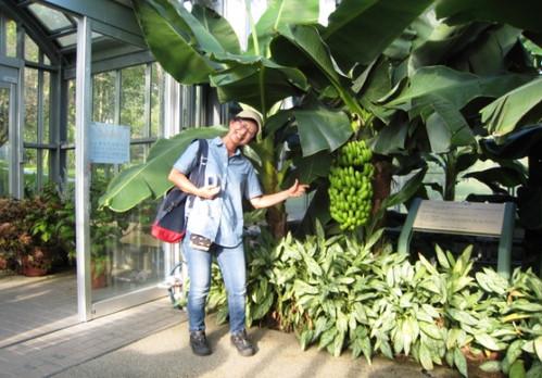 20130830 青いバナナとubazakuraさんのコラボ
