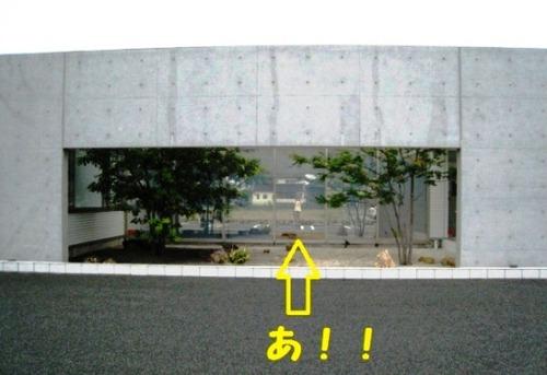 2011/06/26撮影 朝のお散歩