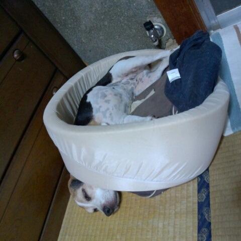 2012/09/08 ハナの寝床