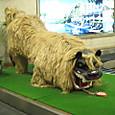 20160403_那覇空港で獅子の出迎え?威嚇するも動じず、素敵!